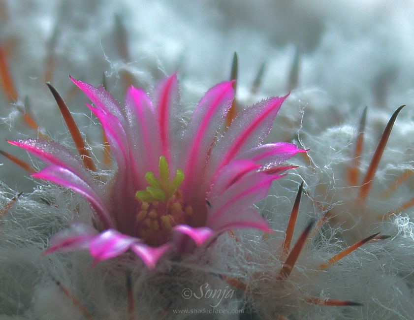 Pink And Prickly